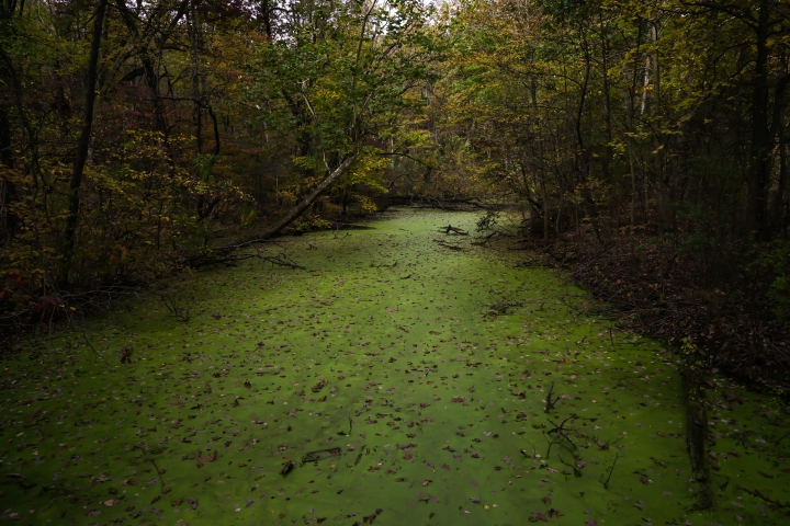 Swampy Canal Edited